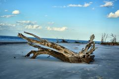 Ilha de Jekyll da praia da madeira lançada à costa, Geórgia imagens de stock royalty free