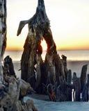 Ilha de Jekyll da praia da madeira lançada à costa, Geórgia no nascer do sol imagens de stock