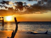 Ilha de Jekyll da praia da madeira lançada à costa, Geórgia no por do sol Imagem de Stock