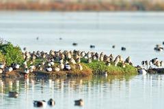 A ilha de pássaro Fotos de Stock Royalty Free