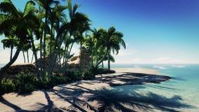 Ilha de palma Imagens de Stock