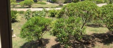 Ilha de Rodrigues Imagens de Stock Royalty Free