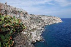 Ilha de São Nicolau da pera espinhosa Fotos de Stock Royalty Free