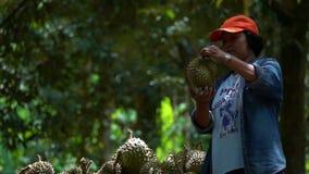 ILHA DE SAMUI, TAILÂNDIA - 31 DE MAIO DE 2018: Durian de Holding Fresh Harvested do fazendeiro na exploração agrícola do Durian n video estoque