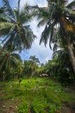 Ilha de Sangiang, Banten indonésia Imagem de Stock Royalty Free