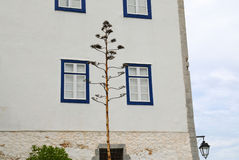 Ilha de Spetses, Grécia Imagem de Stock Royalty Free