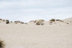 Ilha do canguru, Sul da Austrália Imagem de Stock