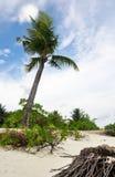 ILHA DO DIVERTIMENTO, MALDIVAS: Palmeira exótica na praia branca da areia Foto de Stock