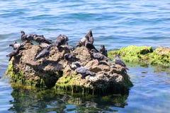 A ilha dos pombos. Fotos de Stock Royalty Free