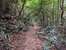 Ilha dos vagabundos do gato de Vietname no dia Imagem de Stock