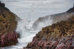 Ilha Escócia de Staffa da caverna de Fingals foto de stock royalty free