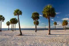 Ilha Florida do pinho Foto de Stock Royalty Free