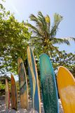 Ilha grand : Les planches de surf au Praia de plage sautille Mendes, état de Rio de Janeiro, Brésil Photo libre de droits