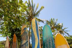 Ilha grande: Las tablas hawaianas en el Praia de la playa corren a medio galope a Mendes, estado de Rio de Janeiro, el Brasil Imagen de archivo
