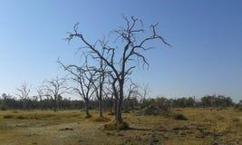 Ilha inoperante da árvore Imagens de Stock Royalty Free