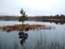 A ilha minúscula com o pinho sozinho no lago Imagens de Stock