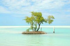 Ilha pequena das caraíbas da ilha de Holbox imagens de stock