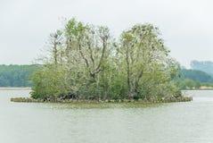 Ilha pequena Imchen em Berlim com aninhamento dos cormorões Imagens de Stock