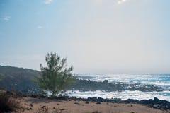 Ilha recolhida Oceano Pacífico da planta e do Havaí Oahu, América Fotografia de Stock Royalty Free