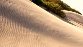 Ilha sul de sopro do capelão das partículas de vidro moventes da duna de areia video estoque