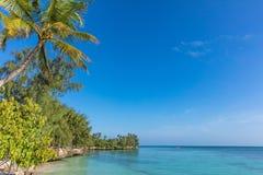 Ilha Tanz?nia East Africa de Kizimkazi Unguja Zanzibar da praia do litoral foto de stock