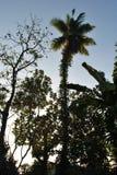 Ilha tropical no oceano de Sri Lanka Fotos de Stock