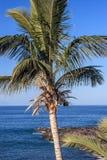 Ilhas Canárias Tenerife Foto de Stock Royalty Free