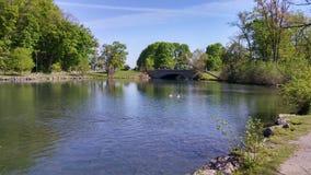 Ilhas de Dufferin em Niagara Falls Imagem de Stock Royalty Free