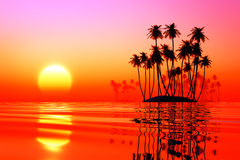 Ilhas do coco no por do sol cor-de-rosa Fotografia de Stock