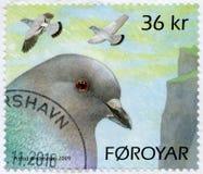 ILHAS FAROÉ - 2009: pombos das mostras fotografia de stock royalty free