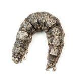 Ilia Underwing Caterpillar Fotografía de archivo libre de regalías