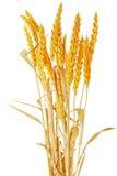 Ilie d'oreilles de blé.  D'isolement sur le fond blanc Images stock