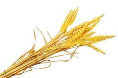 Ilie d'oreilles de blé.  D'isolement sur le fond blanc Images libres de droits