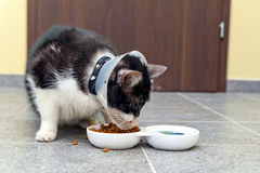 Ill cat eating pet food Royalty Free Stock Image