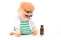 Ill dog and drug. The dog and a bottle of drug and Syringe royalty free stock photography