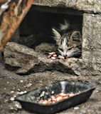 Ill homeless kitten eats Stock Image