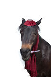 Ill horse with thermometer have fever
