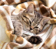 Ill kitten lying with high temperature Stock Photography