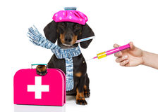 Ill sick dog with illness and vaccine syringe royalty free stock image