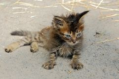Ill stray kitten royalty free stock photo