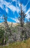 Ill trees Royalty Free Stock Photos