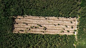 Illegal cutting of forest, empty forest glade aerial photography with drone stock images