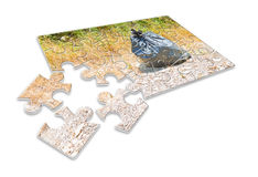 Illegal dumping in the nature - concept image in puzzle shape Royalty Free Stock Images