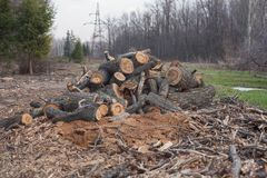 Free Illegal Felling Of Trees In The Forest. Ecology. Royalty Free Stock Photo - 108681185