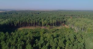 Illegal forest sweating, poaching, harm to the environment, environmental disruption