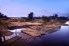Illegal logging Stock Image