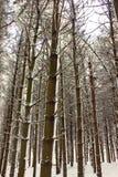 illinois świeży opad śniegu Fotografia Royalty Free