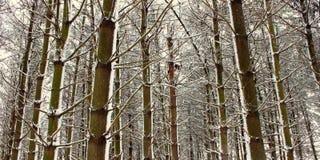 illinois świeży opad śniegu Obraz Royalty Free
