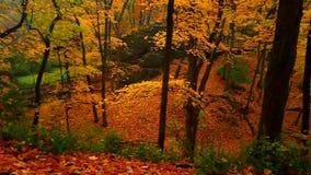 Illinois Autumn Forest stock video