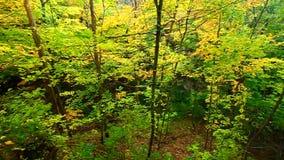 Illinois Autumn Forest Scenery stock footage